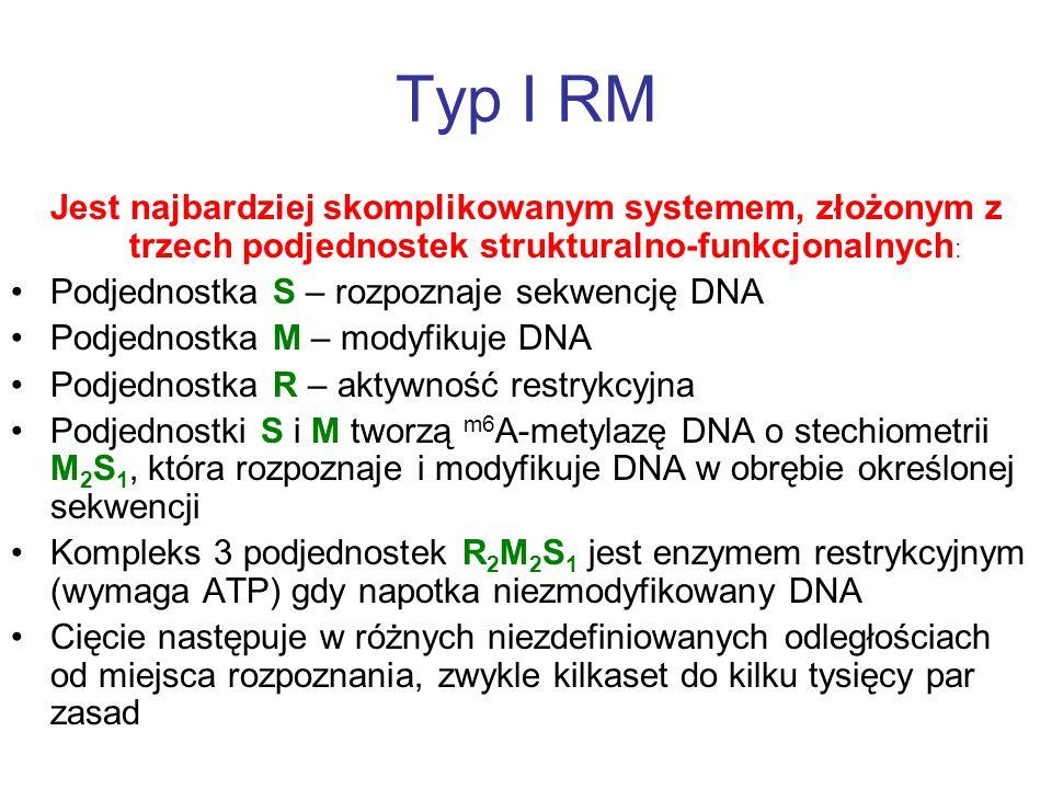 Typ I RMJest najbardziej skomplikowanym systemem, złożonym z trzech podjednostek strukturalno-funkcjonalnych: