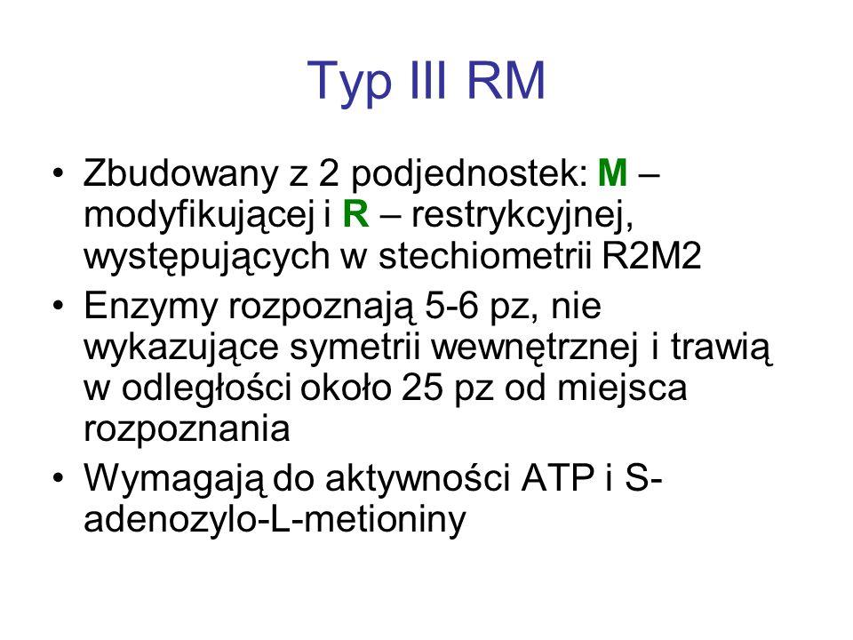Typ III RM Zbudowany z 2 podjednostek: M – modyfikującej i R – restrykcyjnej, występujących w stechiometrii R2M2.