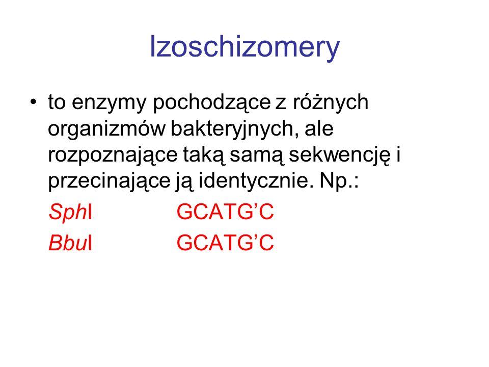 Izoschizomery to enzymy pochodzące z różnych organizmów bakteryjnych, ale rozpoznające taką samą sekwencję i przecinające ją identycznie. Np.: