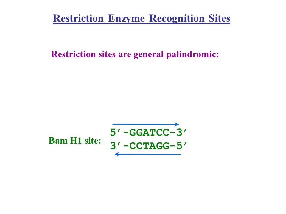 Restriction Enzyme Recognition Sites
