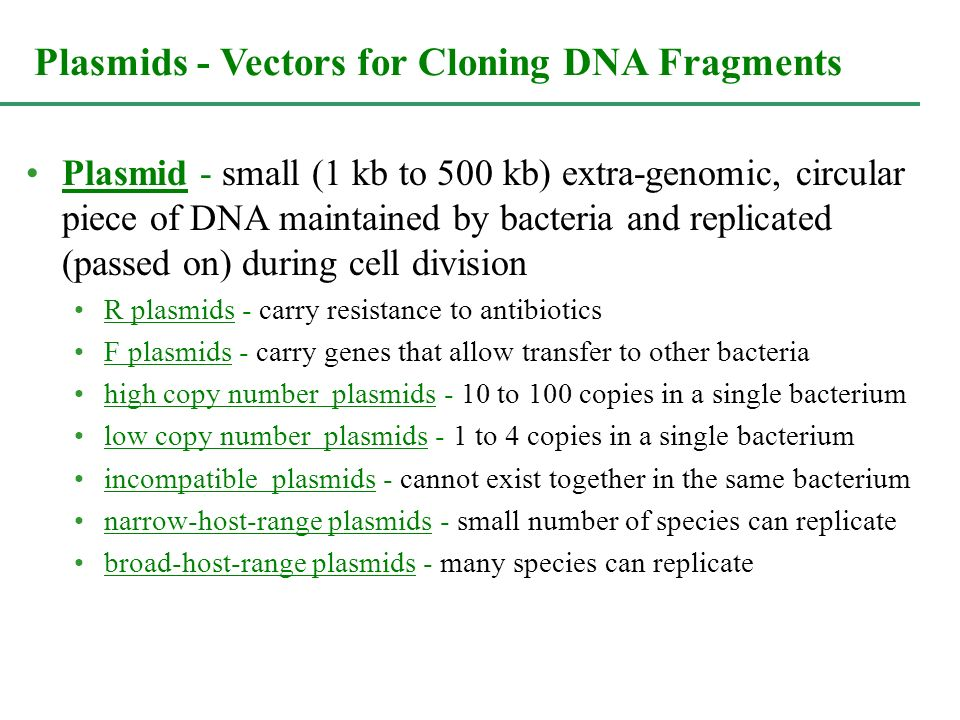 Plasmids - Vectors for Cloning DNA Fragments