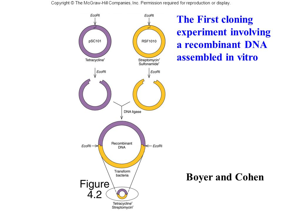 The First cloning experiment involving a recombinant DNA