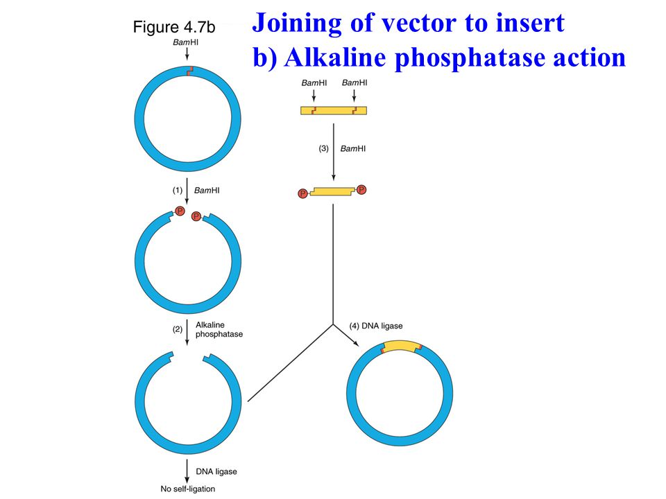 Joining of vector to insert