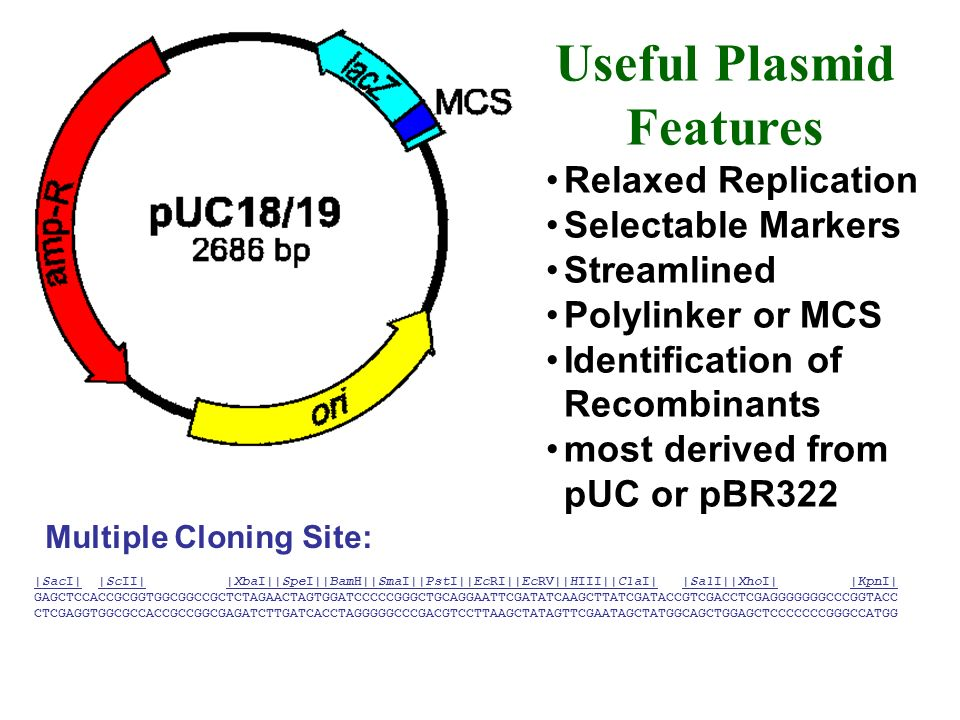 Useful Plasmid Features