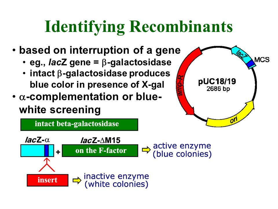 Identifying Recombinants