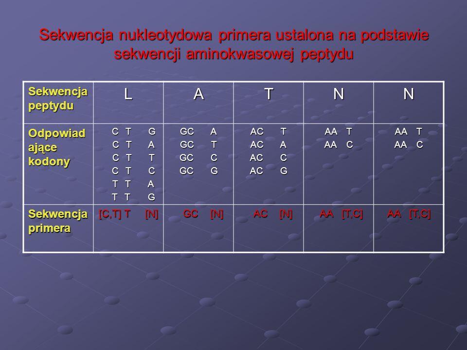 Sekwencja nukleotydowa primera ustalona na podstawie sekwencji aminokwasowej peptydu