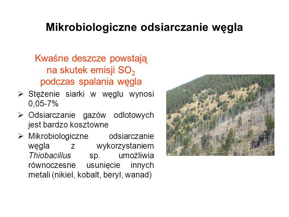 Mikrobiologiczne odsiarczanie węgla