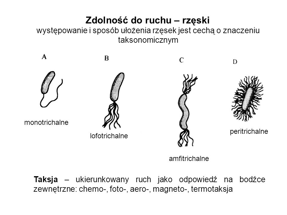 Zdolność do ruchu – rzęski występowanie i sposób ułożenia rzęsek jest cechą o znaczeniu taksonomicznym