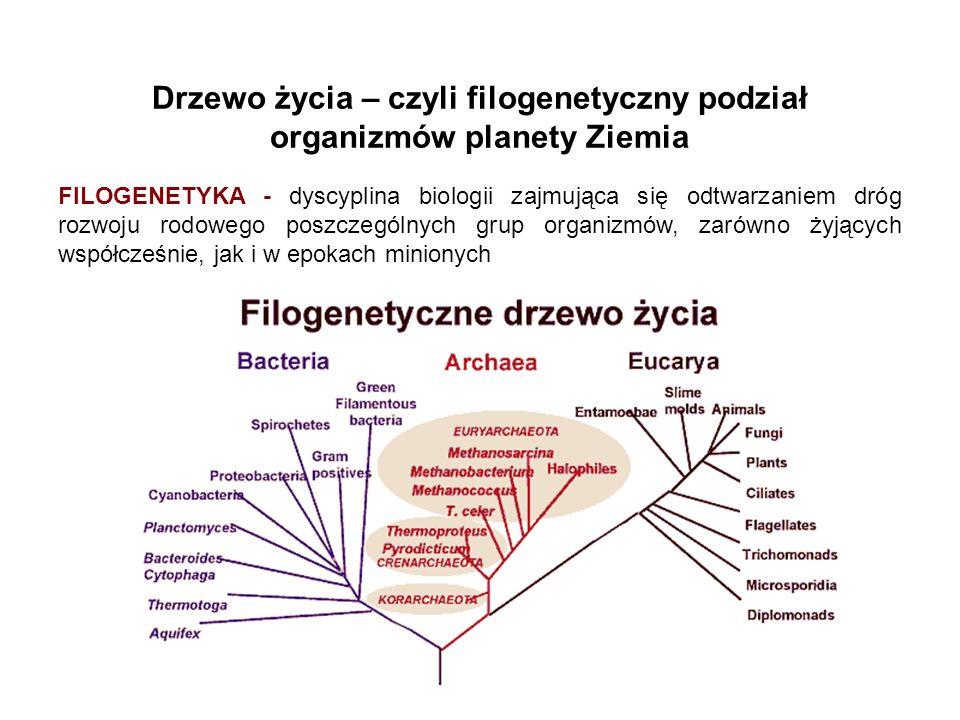Drzewo życia – czyli filogenetyczny podział organizmów planety Ziemia