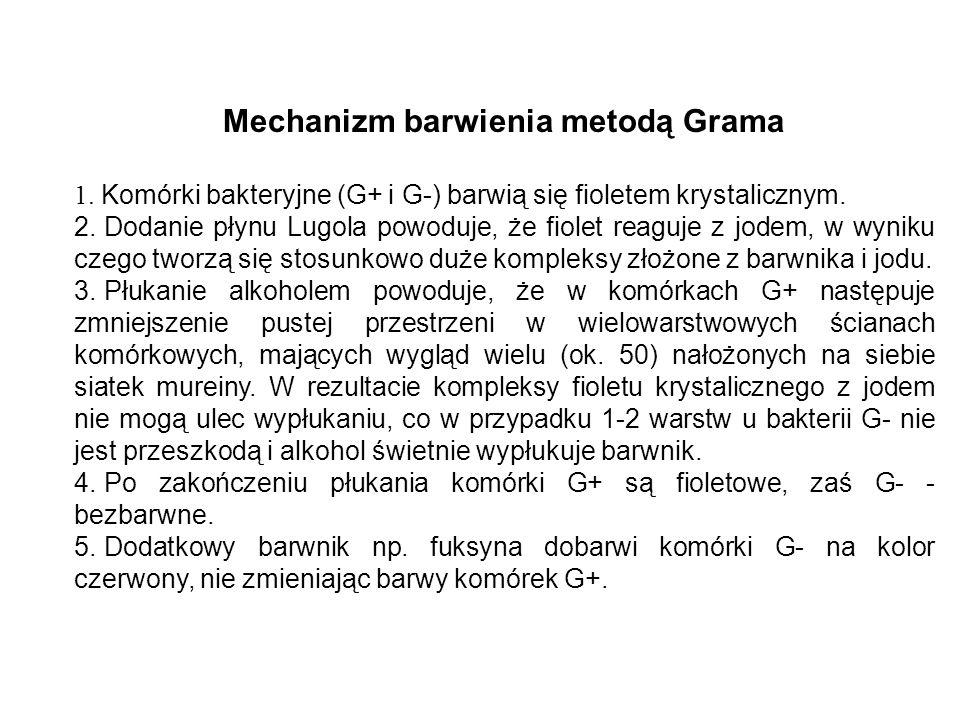 Mechanizm barwienia metodą Grama