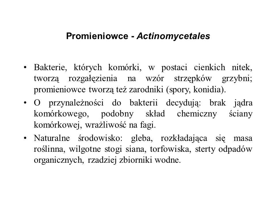 Promieniowce - Actinomycetales