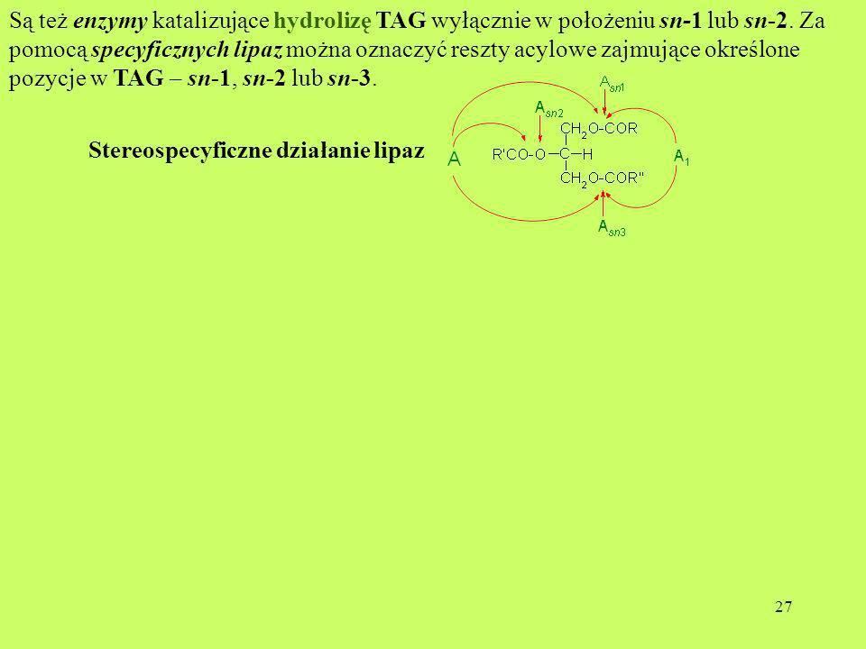 Są też enzymy katalizujące hydrolizę TAG wyłącznie w położeniu sn-1 lub sn-2. Za pomocą specyficznych lipaz można oznaczyć reszty acylowe zajmujące określone pozycje w TAG – sn-1, sn-2 lub sn-3.
