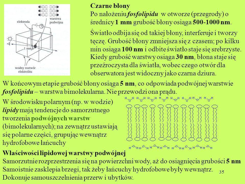 Czarne błony Po nałożeniu fosfolipidu w otworze (przegrody) o średnicy 1 mm grubość błony osiąga 500-1000 nm.