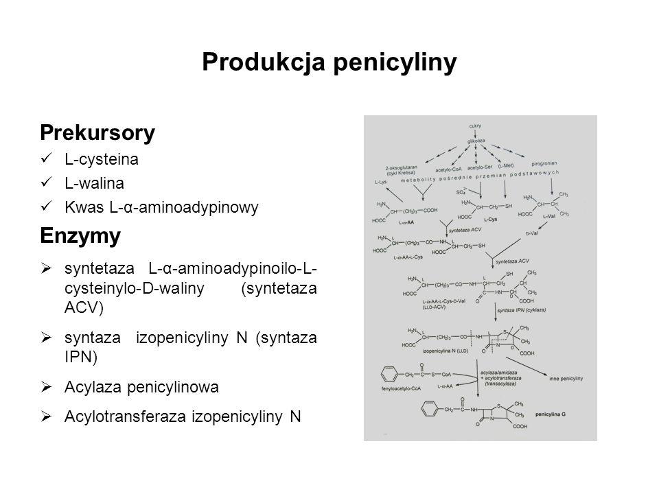 Produkcja penicyliny Prekursory Enzymy L-cysteina L-walina