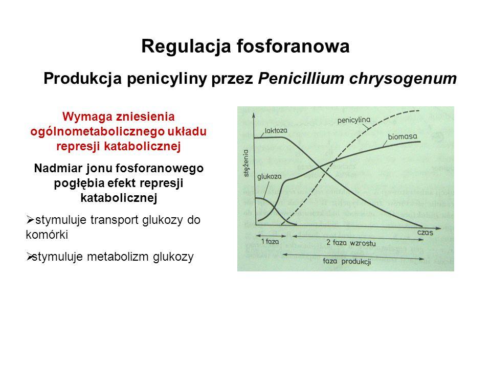 Regulacja fosforanowa