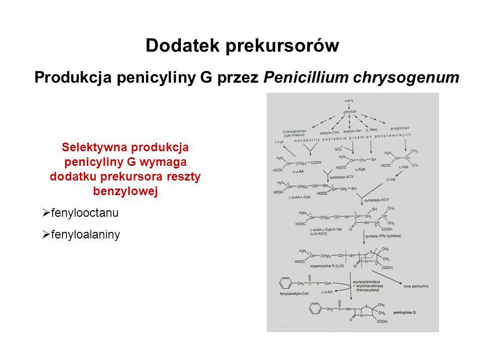 Produkcja penicyliny G przez Penicillium chrysogenum