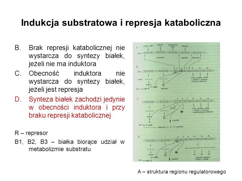Indukcja substratowa i represja kataboliczna