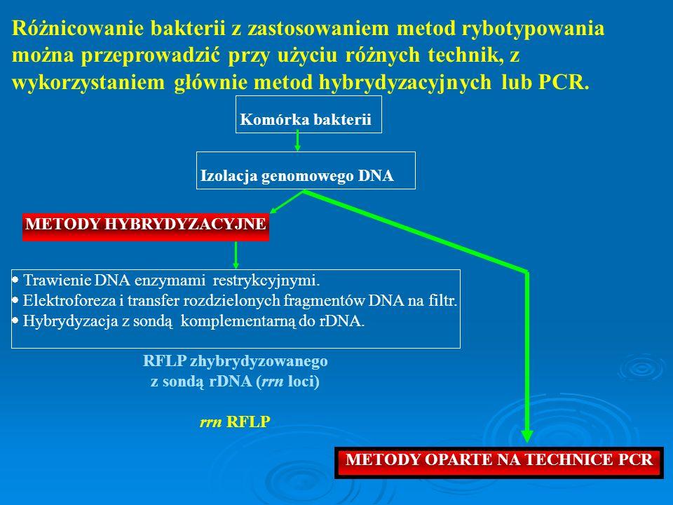 METODY OPARTE NA TECHNICE PCR METODY HYBRYDYZACYJNE
