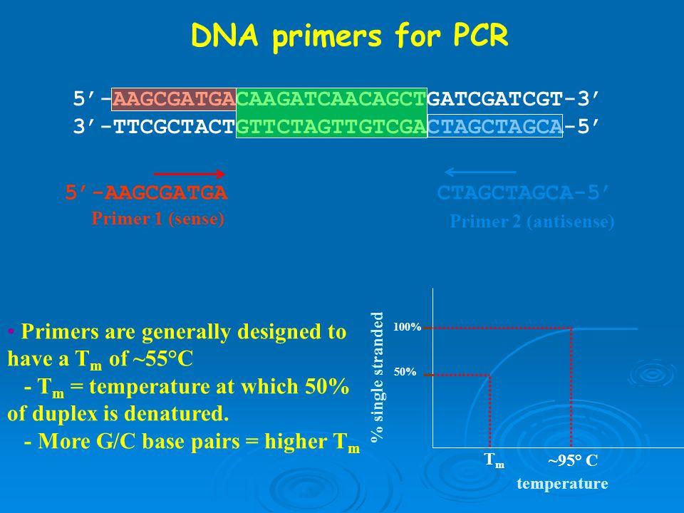 DNA primers for PCR 5'-AAGCGATGACAAGATCAACAGCTGATCGATCGT-3'