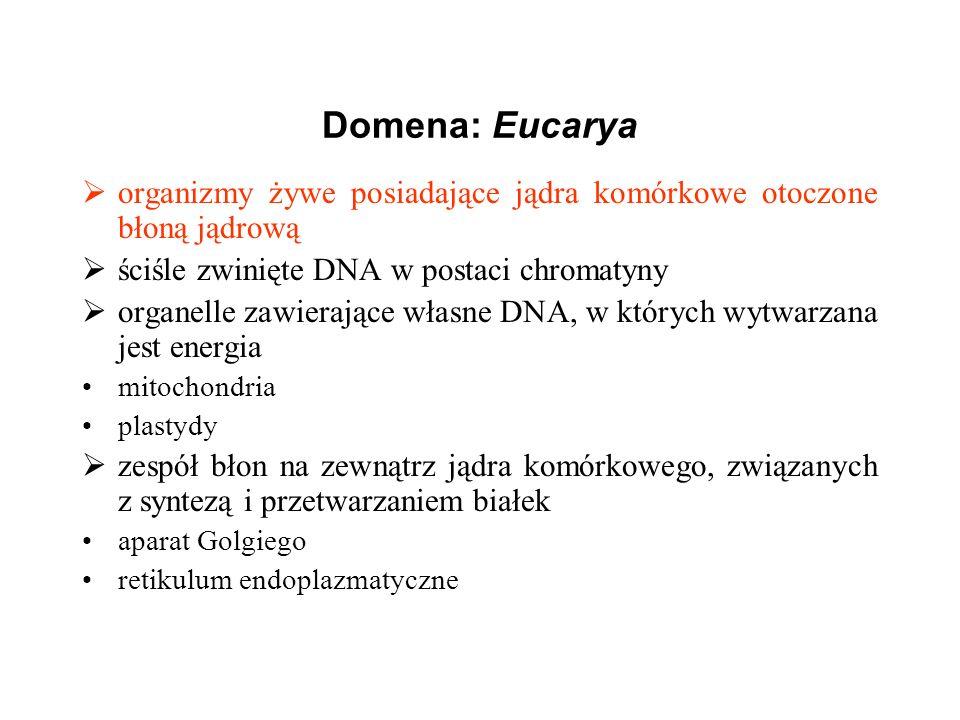 Domena: Eucarya organizmy żywe posiadające jądra komórkowe otoczone błoną jądrową. ściśle zwinięte DNA w postaci chromatyny.