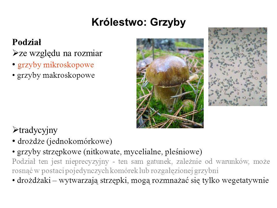 Królestwo: Grzyby Podział ze względu na rozmiar grzyby mikroskopowe