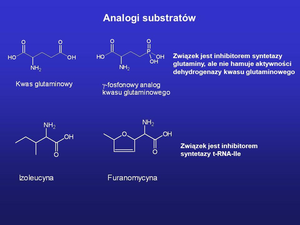 Analogi substratów Związek jest inhibitorem syntetazy