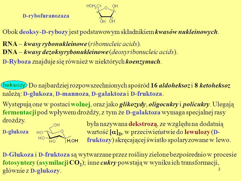 D-rybofuranozaza Obok deoksy-D-rybozy jest podstawowym składnikiem kwasów nukleinowych. RNA – kwasy rybonukleinowe (ribonucleic acids).