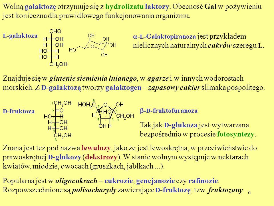 Tak jak D-glukoza jest wytwarzana bezpośrednio w procesie fotosyntezy.