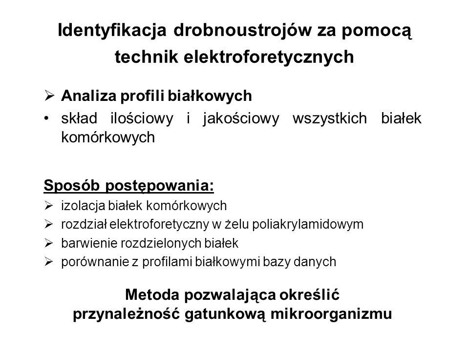 Identyfikacja drobnoustrojów za pomocą technik elektroforetycznych