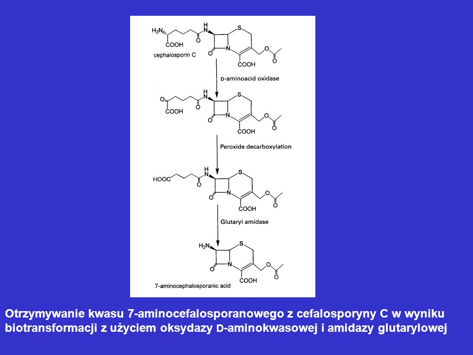 Otrzymywanie kwasu 7-aminocefalosporanowego z cefalosporyny C w wyniku