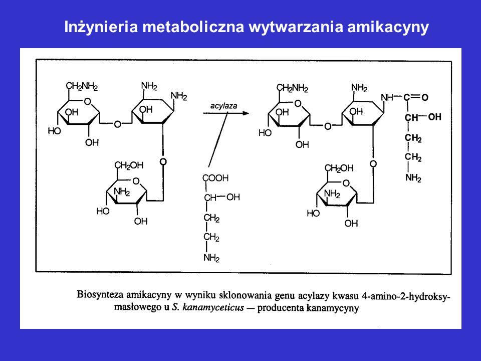 Inżynieria metaboliczna wytwarzania amikacyny