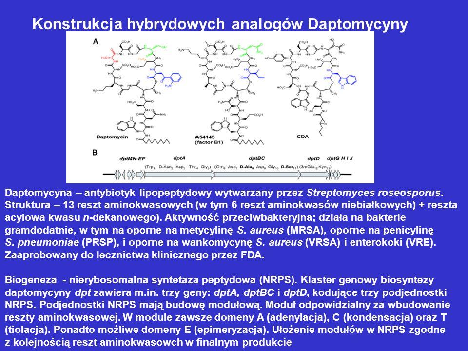 Konstrukcja hybrydowych analogów Daptomycyny