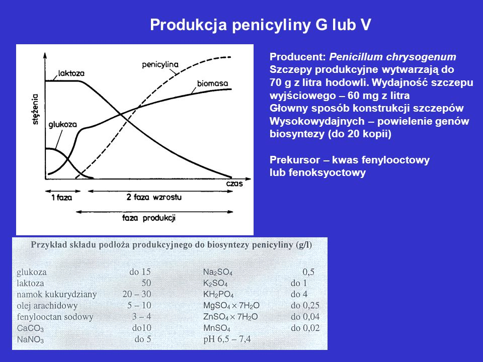 Produkcja penicyliny G lub V