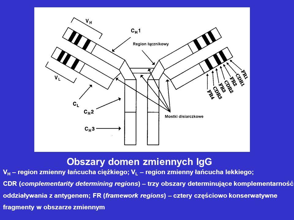 Obszary domen zmiennych IgG