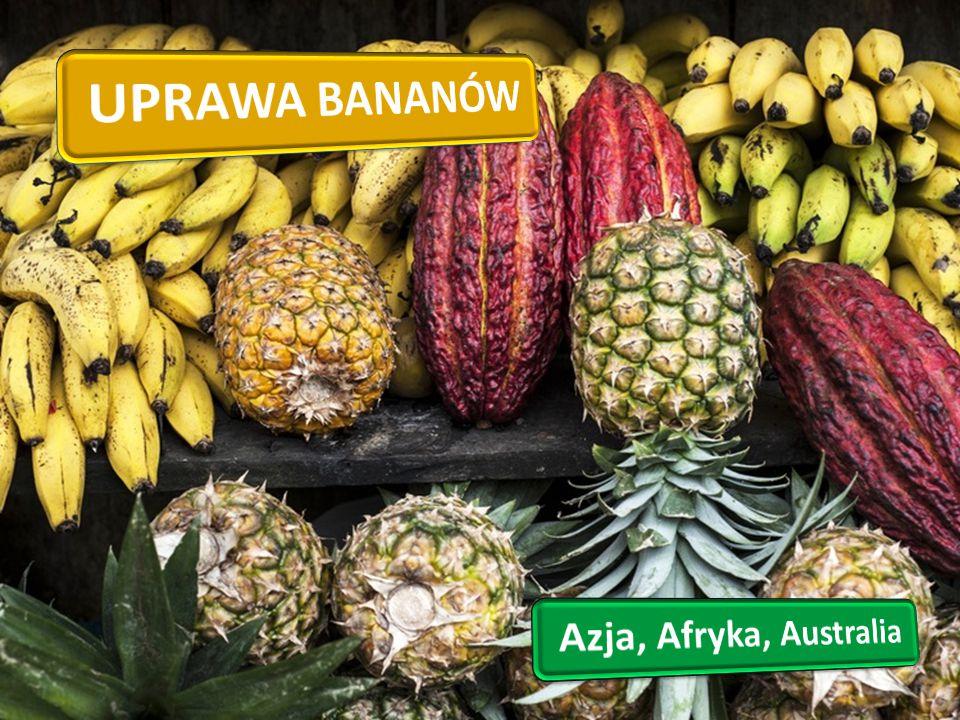 UPRAWA BANANÓW Azja, Afryka, Australia