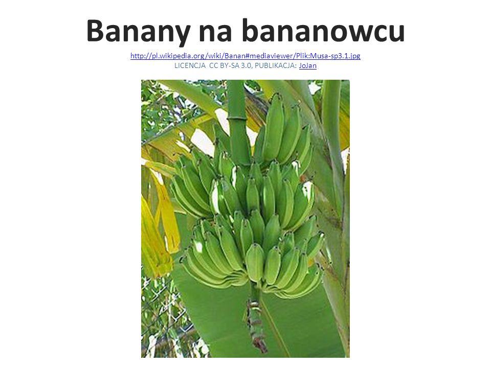 Banany na bananowcu http://pl. wikipedia