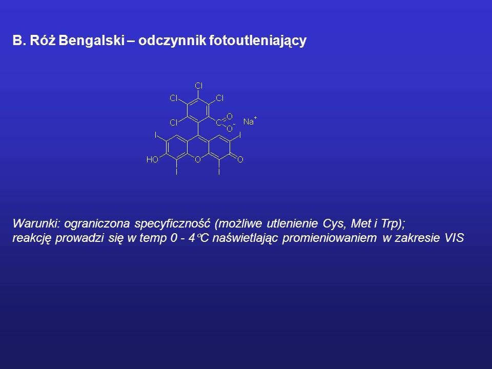 B. Róż Bengalski – odczynnik fotoutleniający