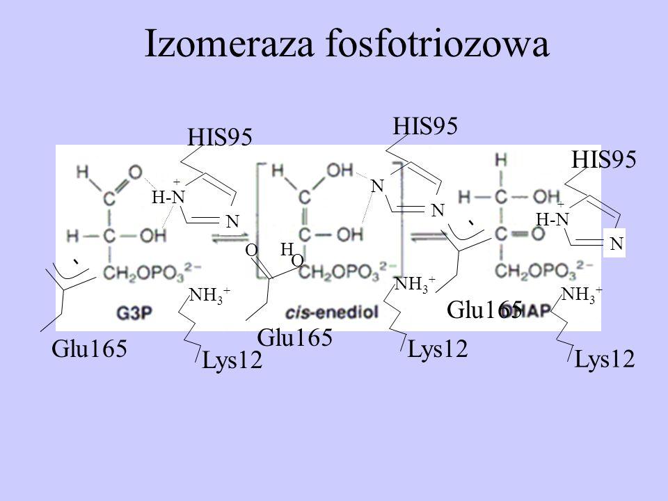 Izomeraza fosfotriozowa