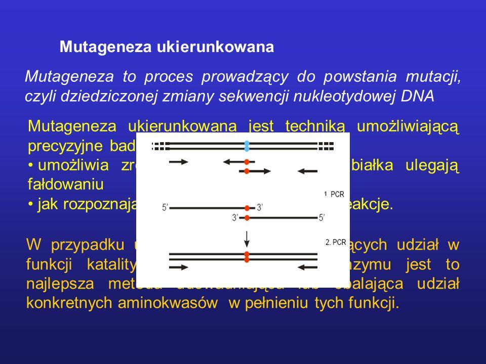Mutageneza ukierunkowana