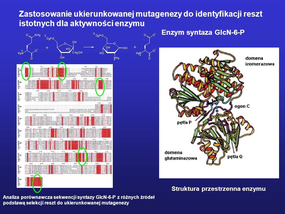 Zastosowanie ukierunkowanej mutagenezy do identyfikacji reszt