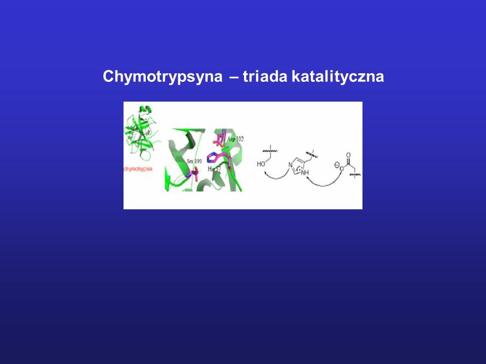 Chymotrypsyna – triada katalityczna