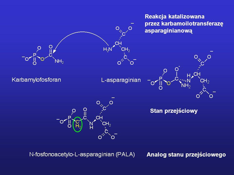 Reakcja katalizowanaprzez karbamoilotransferazę.asparaginianową.
