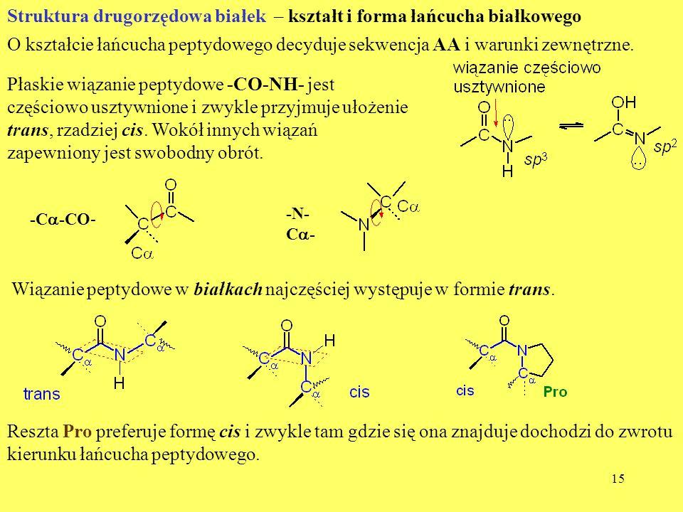 Struktura drugorzędowa białek – kształt i forma łańcucha białkowego