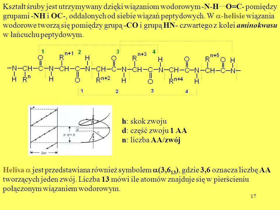 Kształt śruby jest utrzymywany dzięki wiązaniom wodorowym -N-H
