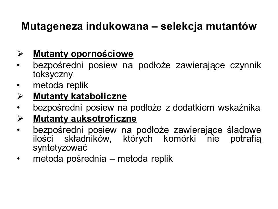 Mutageneza indukowana – selekcja mutantów