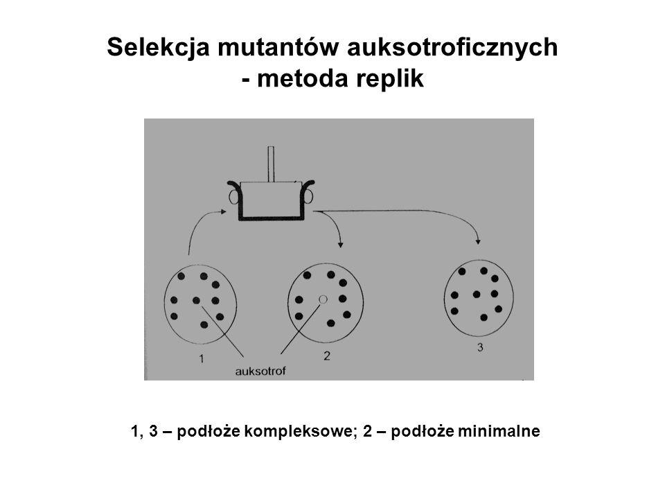Selekcja mutantów auksotroficznych - metoda replik