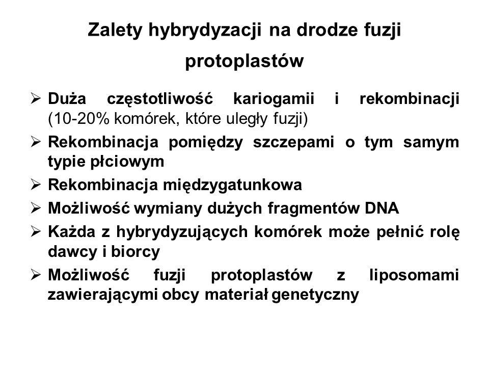 Zalety hybrydyzacji na drodze fuzji protoplastów
