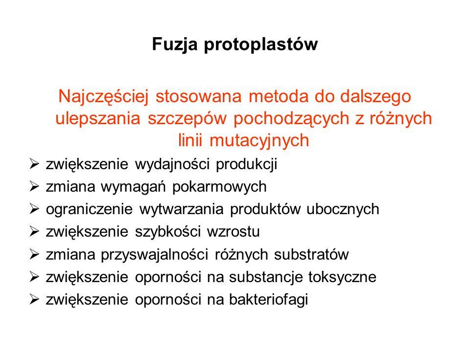Fuzja protoplastów Najczęściej stosowana metoda do dalszego ulepszania szczepów pochodzących z różnych linii mutacyjnych.