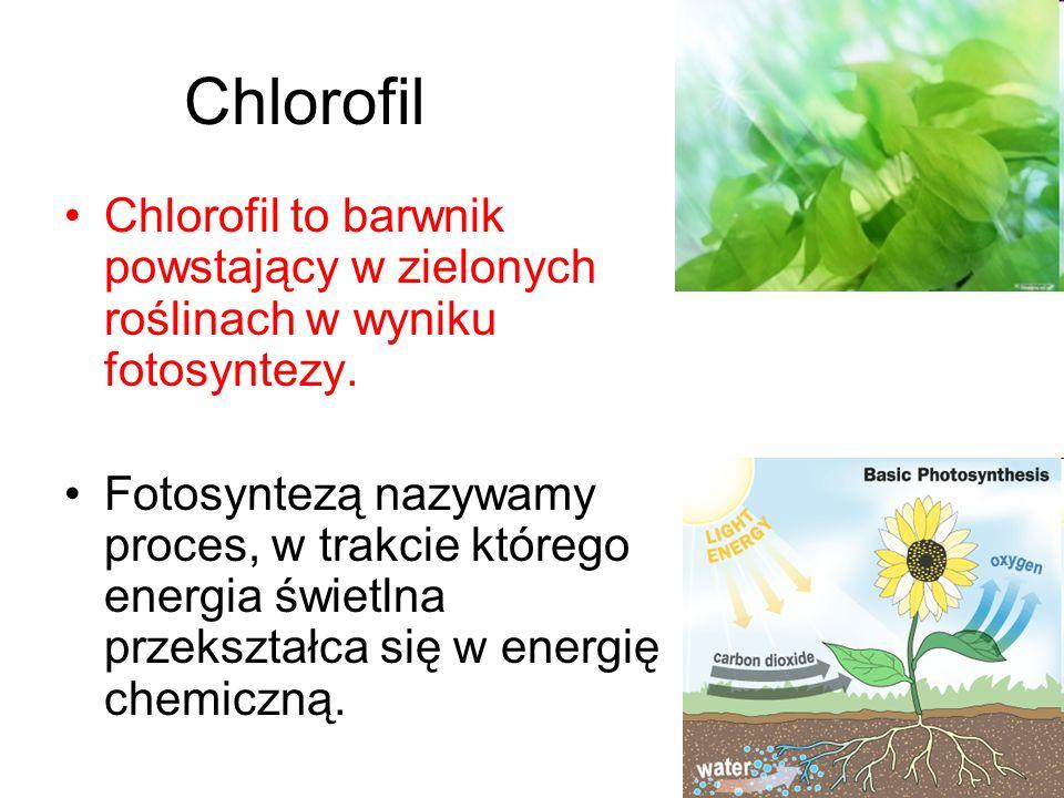 Chlorofil Chlorofil to barwnik powstający w zielonych roślinach w wyniku fotosyntezy.