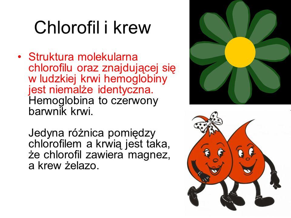 Chlorofil i krew